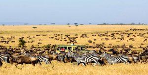 TANZANIA WILDLIFE SPECIAL