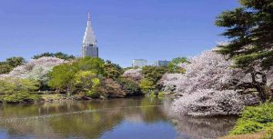 JAPAN WITH CHERRY BLOSSOM MFL