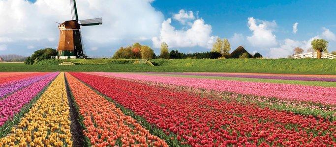 Tulip-Gardens